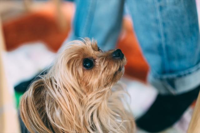 なぜ犬の寿命は人間よりも短いのだろう?